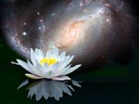 lotus universe